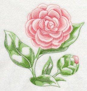 J8966-fleurs-camelia